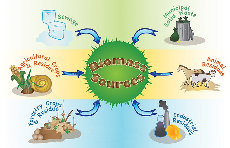 a picture of the sources of biomass