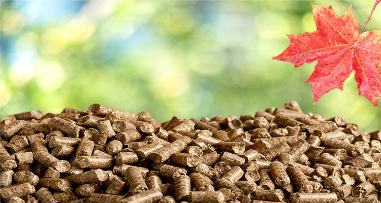 a picture of wood pellets in Canada