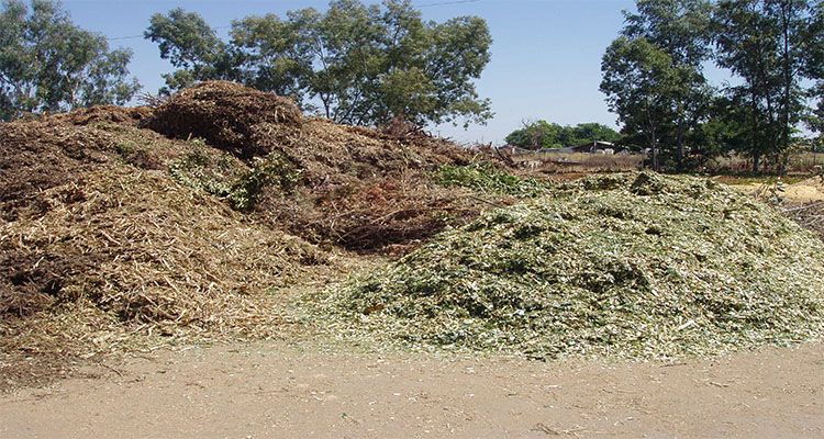 biomass waste has been left on the countryside