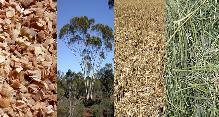 raw materials for Australian wood pellet plants