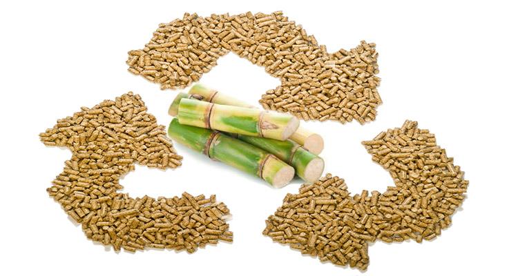 biomass pellets make from sugarcane bagasse