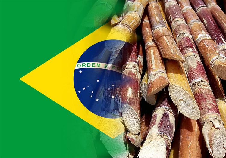 Top sugarcane country of origin