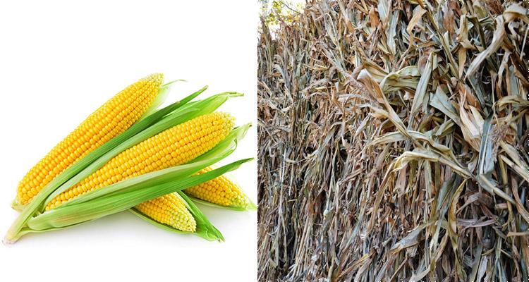corn and cornstalk for biomass pellet making