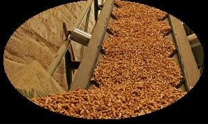 high quality wood pellet on convey belt