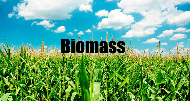 a picture of biomass sources