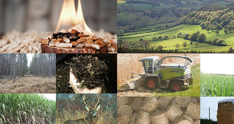 chins resource superiority of developing biomass energy